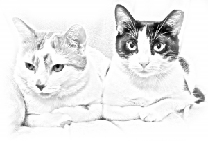 milo cat otis dog coloring pages | BRAND NEW: Suncoast Pet's Coloring Books Featuring YOUR ...